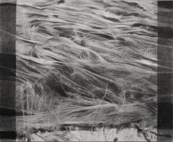 Glade Series: Grass (down)
